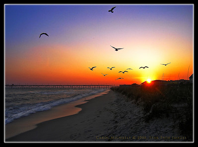 Soaring seagulls frozen in flight near Oak Island NC. One of the many beautiful coastal images taken by SPI freelancer, Carol Michaels. Photo enhanced by senior editor at SPI.