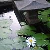 Golconde Garden Pond / Пруд в саду Голконды
