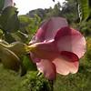 Mobile phone photo.<br /> Фото сделано мобильным телефоном.