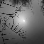 Sun in the lake