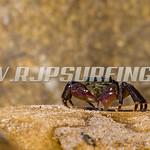 Krusty Crab