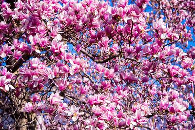 Spring pics