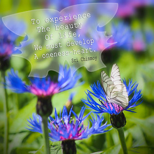 butterfly flowers