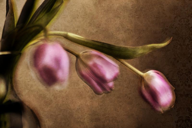 Vintage Tulip Series