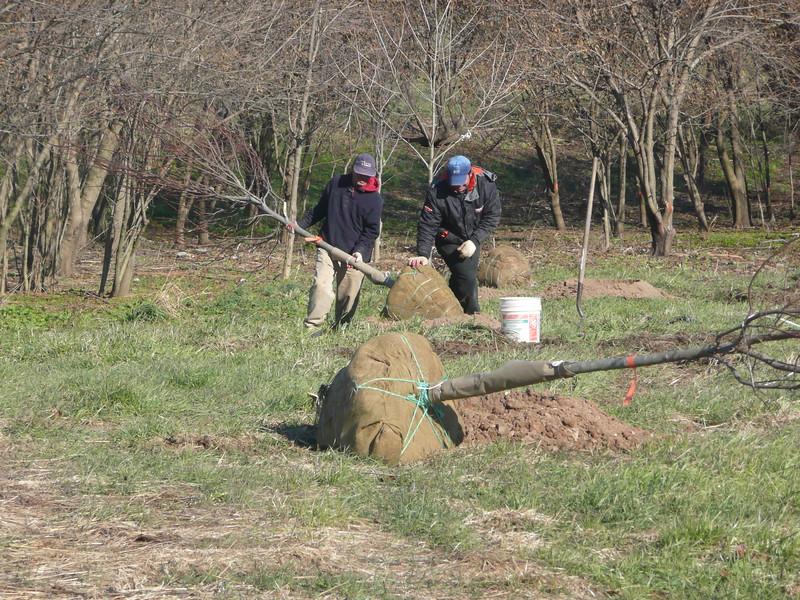 Reedbird Park tree planting