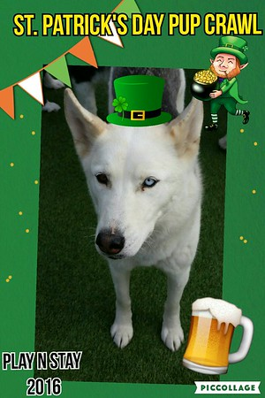 St. Patrick's Day Pup Crawl
