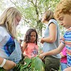 During Friday's showcase of what they learned, members of the STEAM Team talked about the wild edible flora they learned to forage from the fields and forest. JENN SMITH - THE BERKSHIRE EAGLE