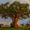TARANGIRE NP, Tanzania, Africa