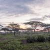 AKASIE, NDUTU, SERENGETI, Tanzania, Africa