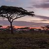 NDUTU, SERENGETI, Tanzania, Africa