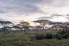 NDUTU SAFARI LODGE, SERENGETI, TANZANIA
