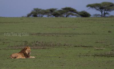 Serengeti near Ndutu lodge