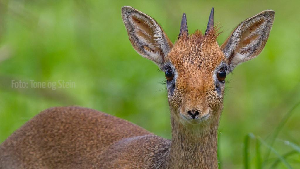 IMAGE: http://tromsofoto.smugmug.com/Africa/African-mammals/i-NPWtt8c/0/XL/20111128-_MG_9889-XL.jpg