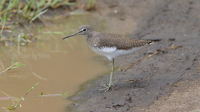 African waders and waterfowl