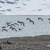 RINGGÅS Longyearbyen
