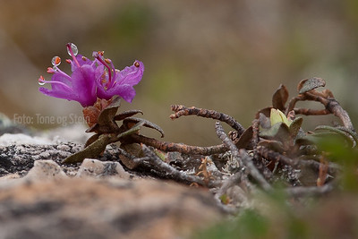 Northern Wild Flowers & plants