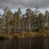 Pasvik, furu, vann, elv, pine, nasjonalpark, National Park