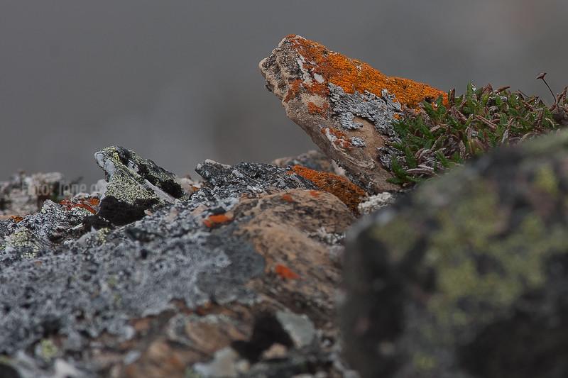Øvre Dividal nasjonalpark, national park