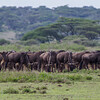 GNU, WILDEBEEST, NDUTU, SERENGETI, TANZANIA
