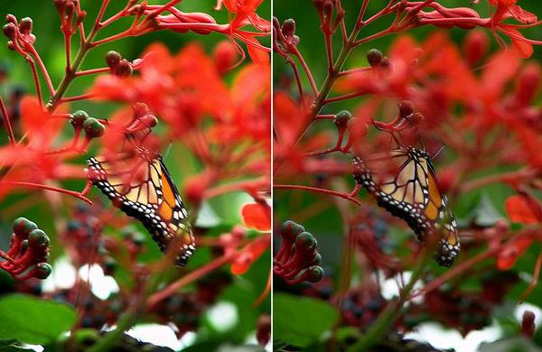 Niagara Butterfly Conservatory