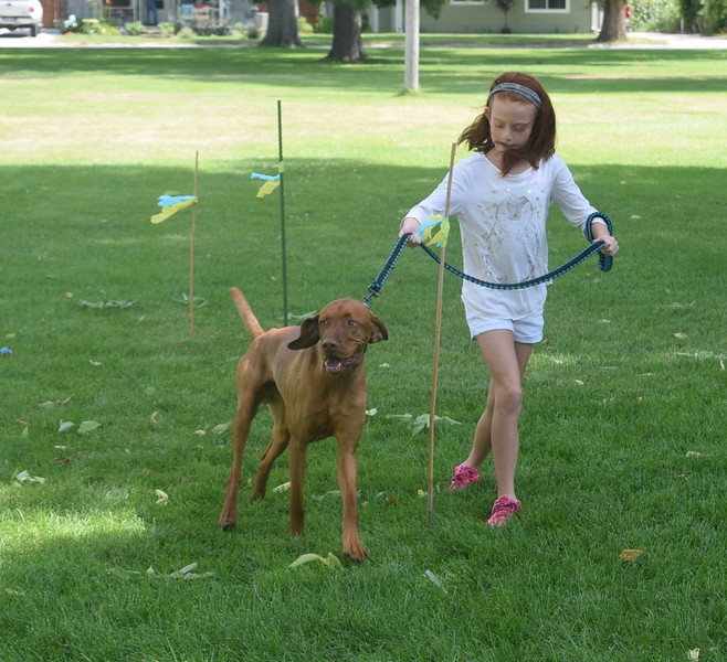 Sydney Baseggio and her vizsla Hogan make their way through the agility course at the Kids Pet Show Saturday, July 16, 2016. They placed third in the division.
