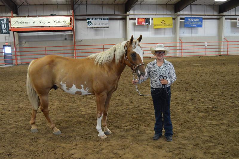 Addison Ramey, reserve grand champion gelding. 2016 Logan County Fair Horse Show halter classes.