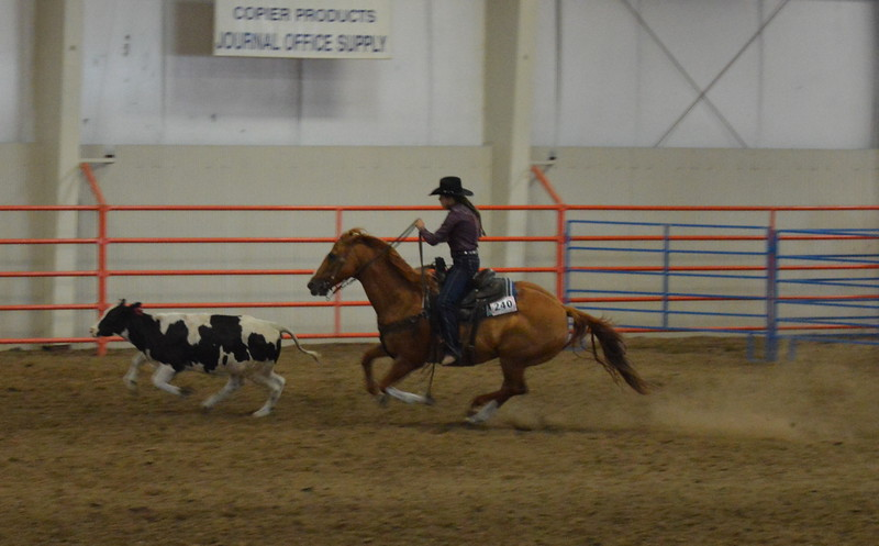 Clarissa Coakley, senior working cow horse.
