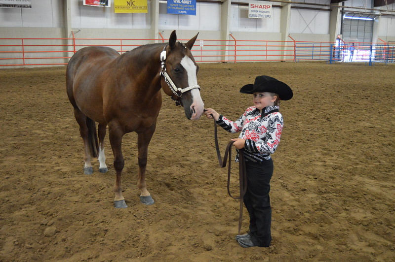 Hadlie Robinette, junior champion showman. 2016 Logan County Fair Horse Show halter class.