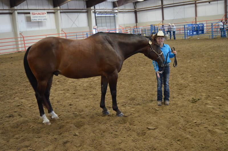 Peyton Waitley, Grand Champion Gelding. 2016 Logan County Fair Horse Show halter classes