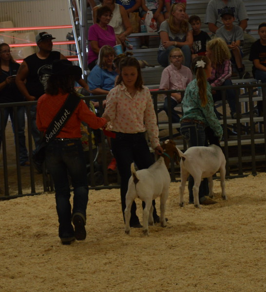 Sweetheart Abbey Zink, left, presents ribbons to the top two exhibitors in the Lightweight Goats Class 3, for goats weighing 63 to 65 pounds. 8.3.16 Logan County Fair Goat Show