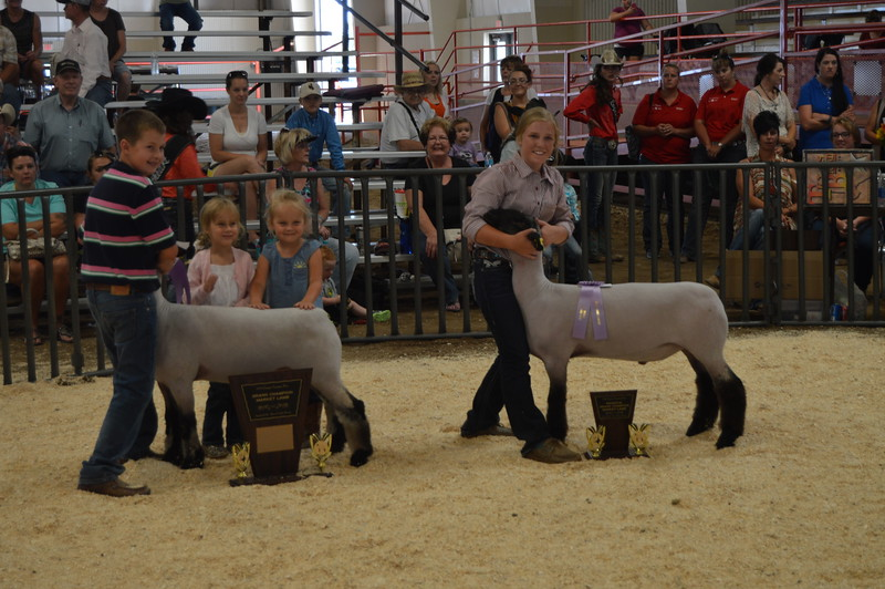 Jaxson Samber, left, and Kinlie Lewis, right, pose their sheep with their trophies for Grand Champion Market Lamb and Reserve Grand Champion Market Lamb, respectively. Junior Sheep Show Logan County Fair 2016