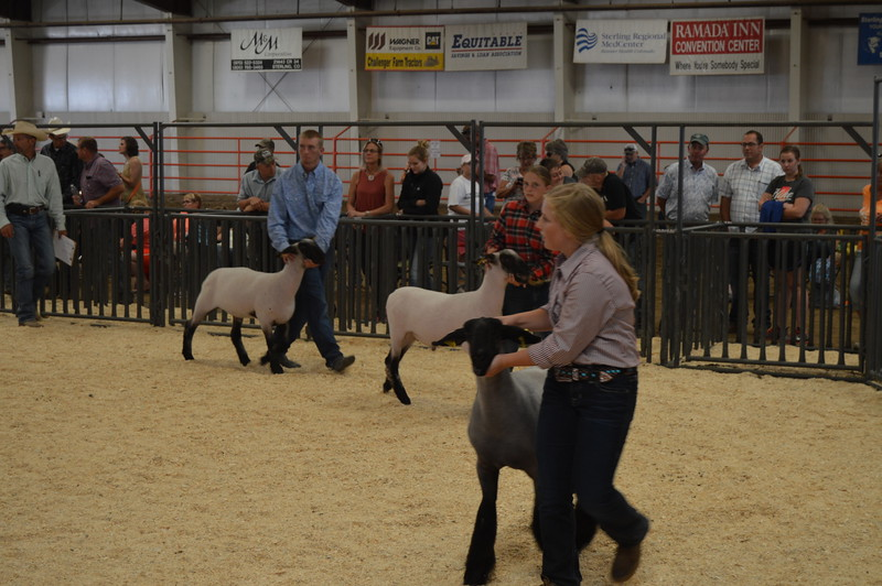 Exhibitors with lambs weighing 151 to 154 lbs. enter the ring for their Heavyweight class during the Junior Sheep Show Wednesday, Aug. 3, 2016, at the Logan County Fair.