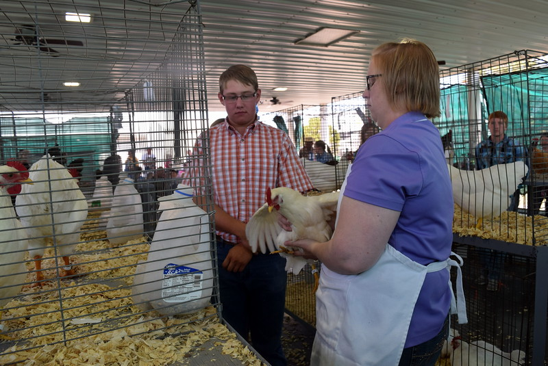 Adam Davis watches as judge Colleen Gattshall looks over his chicken during the Junior Poultry Show Thursday, Aug. 4, 2016, at the Logan County Fair.