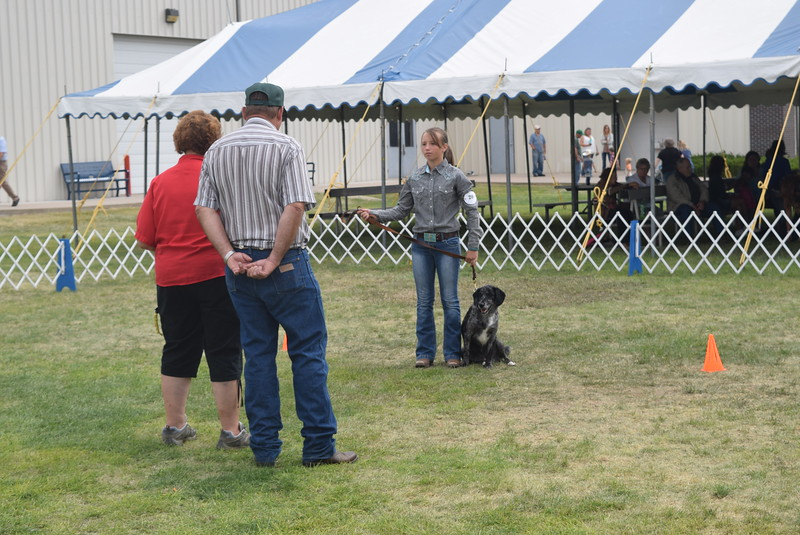 Faith Gettman, a competitor in the intermediate division, waits for the judge's instructions during the Junior Dog Show Friday, Aug. 5, 2016, at the Logan County Fair.