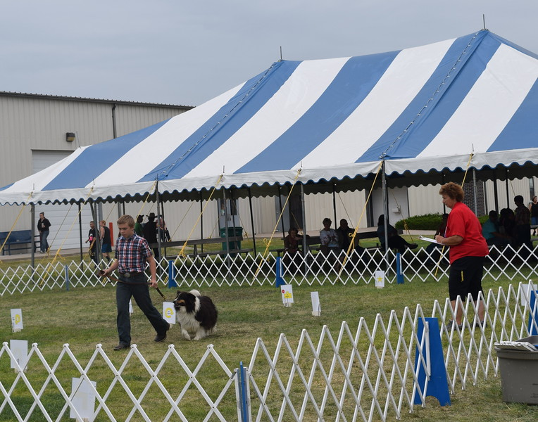 Charles Fehringer, a competitor in the intermediate division, leads his dog around the ring for the judge during the Junior Dog Show Friday, Aug. 5, 2016, at the Logan County Fair.