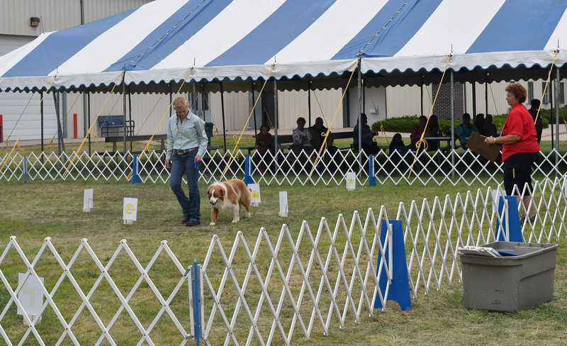 Morgan Cockroft, a competitor in the senior division, leads her dog through the obstacle course during the Junior Dog Show Friday, Aug. 5, 2016, at the Logan County Fair.