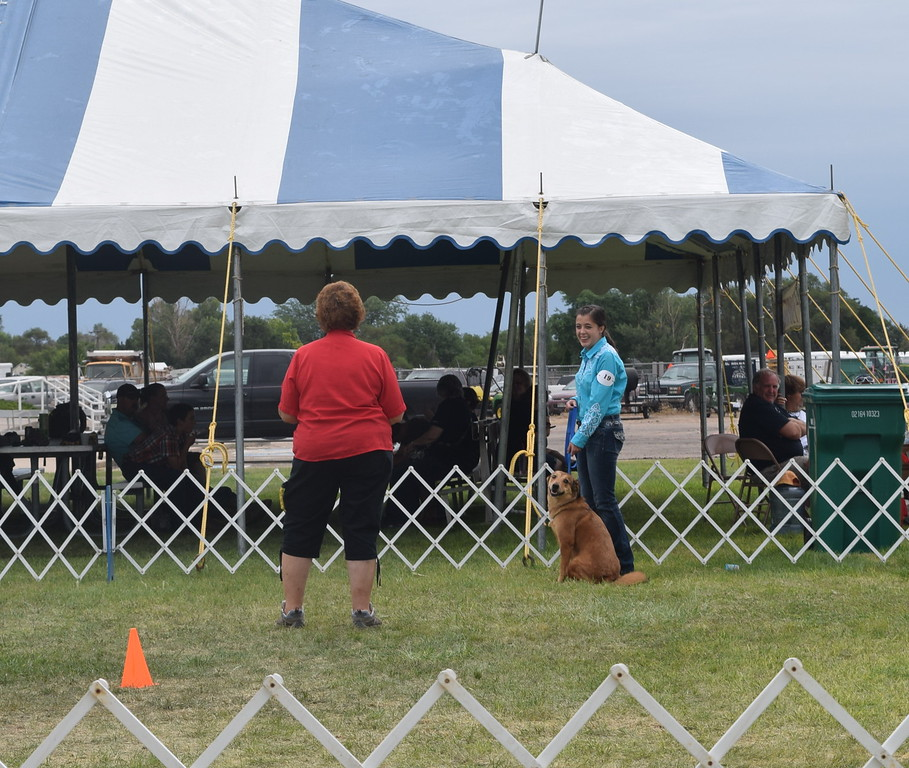 Emily Lovell, a competitor in the senior division, waits for the judge's instructions during the Junior Dog Show Friday, Aug. 5, 2016, at the Logan County Fair.