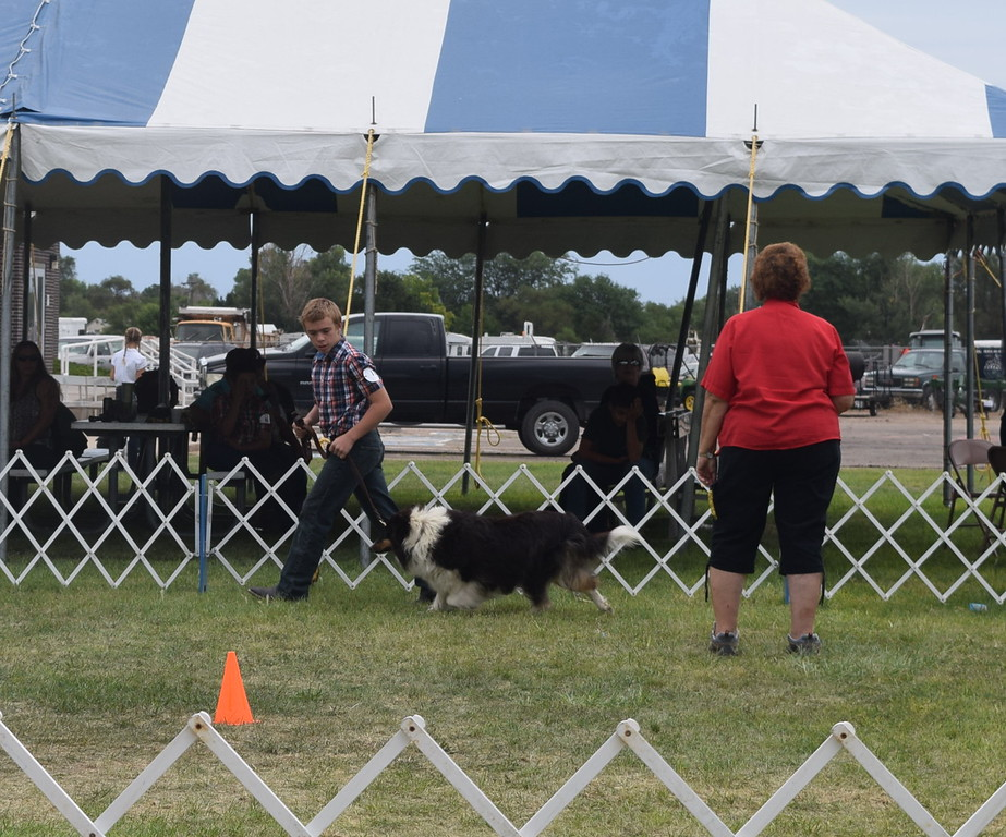 Charles Fehringer, a competitor in the intermediate division, leads his dog around the ring in front of the judge during the Junior Dog Show Friday, Aug. 5, 2016, at the Logan County Fair.