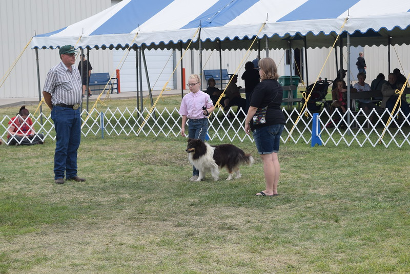 Sadie Fehringer, a competitor in the junior division, walks her dog around two human cones during the Junior Dog Show Friday, Aug. 5, 2016, at the Logan County Fair.