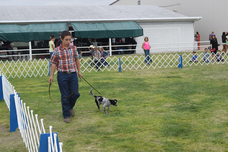 Bodey MacIsaac leads his dog around the ring during the Junior Dog Show Friday, Aug. 5, 2016, at the Logan County Fair.