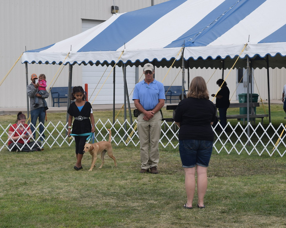Jasmine Martinez leads her dog around two human cones during the Junior Dog Show Friday, Aug. 5, 2016, at the Logan County Fair.
