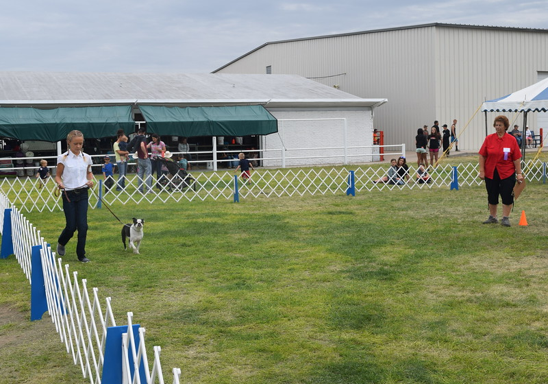 Starla Van Wyk, a competitor in the intermediate division, leads her dog around the ring in front of the judge during the Junior Dog Show Friday, Aug. 5, 2016, at the Logan County Fair.
