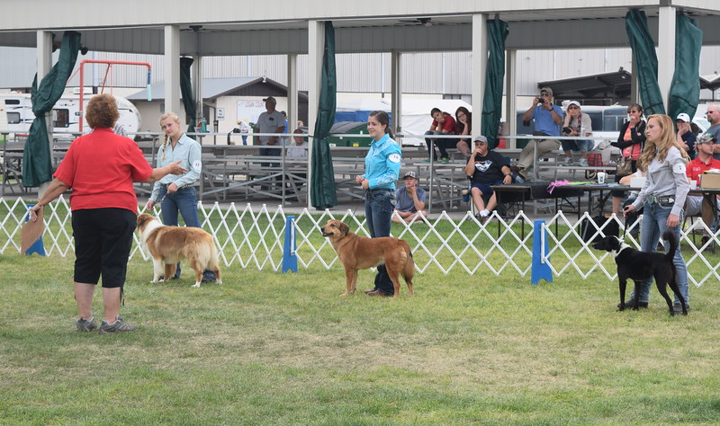 Morgan Cockroft, Emily Lovell and Jamie Kielian, competitors in the senior division, listen to the judge during the Junior Dog Show Friday, Aug. 5, 2016, at the Logan County Fair.