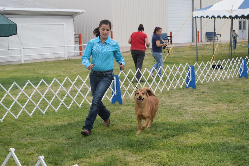 Emily Lovell, a competitor in the senior division, leads her dog around the ring during the Junior Dog Show Friday, Aug. 5, 2016, at the Logan County Fair.