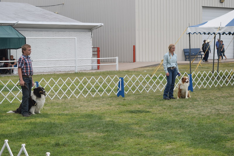 Charles Fehringer and Morgan Cockroft wait for the judges directions during the Junior Dog Show Friday, Aug. 5, 2016, at the Logan County Fair.