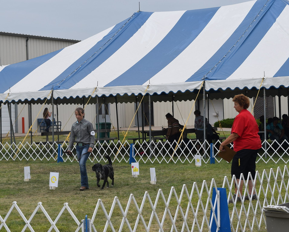 Faith Gettman, a competitor in the intermediate division, runs her dog around the ring for the judge during the Junior Dog Show Friday, Aug. 5, 2016, at the Logan County Fair.