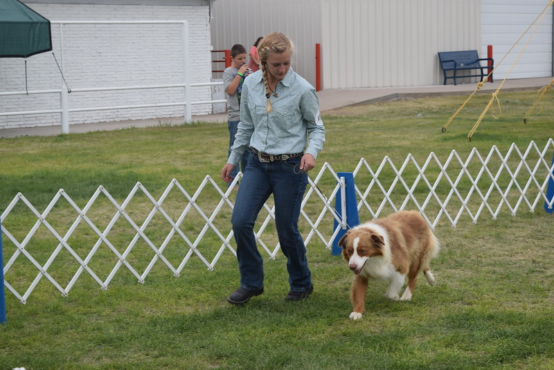 Morgan Cockroft, a competitor in the senior division, leads her dog around the ring during the Junior Dog Show Friday, Aug. 5, 2016, at the Logan County Fair.