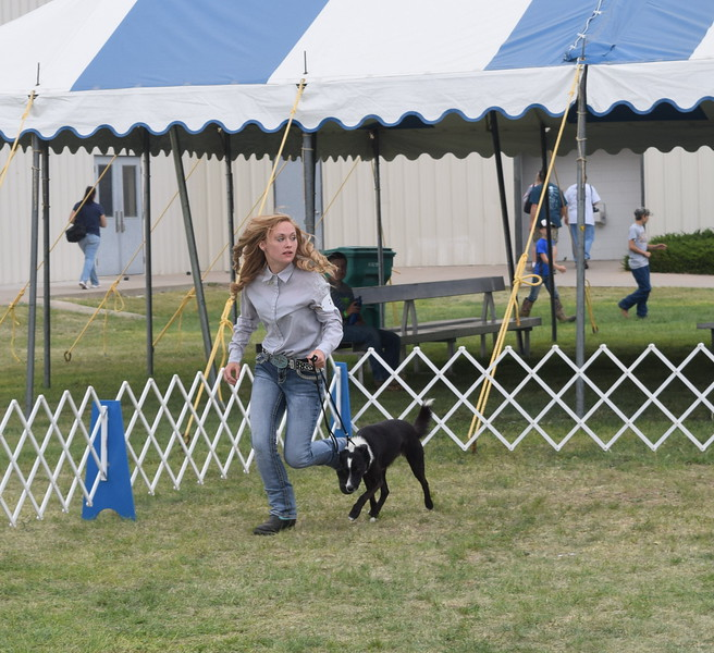Jamie Kielian leads her dog around the ring during the Junior Dog Show Friday, Aug. 5, 2016, at the Logan County Fair. She was named reserve grand champion.