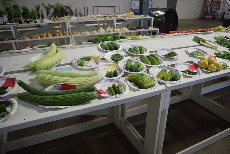 Vegetables were on display underneath the grandstands Saturday, Aug. 6, 2016, at the Logan County Fair.