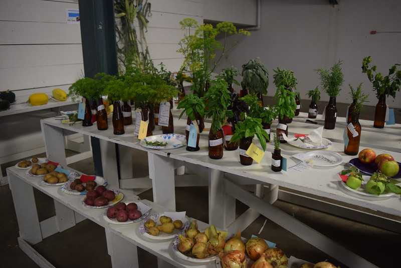 Award winning vegetable and horticulture projects were on display underneath the grandstands Saturday, Aug. 6, 2016, at the Logan County Fair.